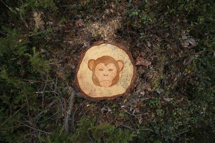 Deforestation Faces by Stevo Dirnberger | How Far From Home