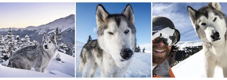 Loki The Wolfdog | How Far From Home